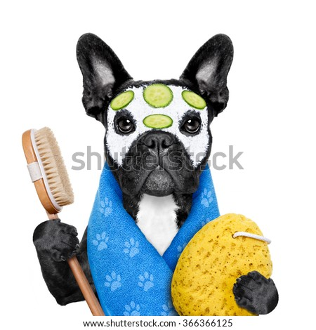 french bulldog dog relaxing  with beauty mask in   spa wellness center ,getting a facial treatment with  moisturizing cream mask and cucumber , sponge and brush, isolated on white background - stock photo