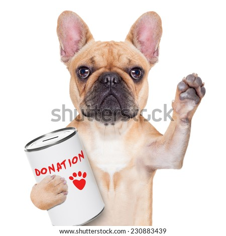 french bulldog dog with a donation can , collecting money for  charity, isolated on white background - stock photo