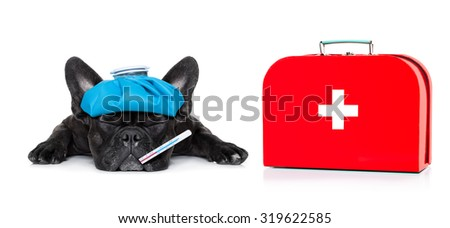 french bulldog dog  with  headache and hangover with ice bag or ice pack on head, eyes closed suffering , first aid kit beside,  isolated on white background - stock photo