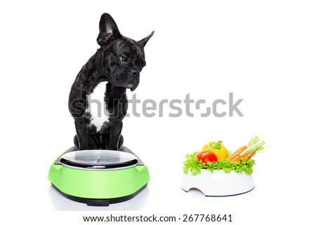 french bulldog dog  with  healthy  vegan food bowl,sitting on a weight scale, isolated on white background - stock photo