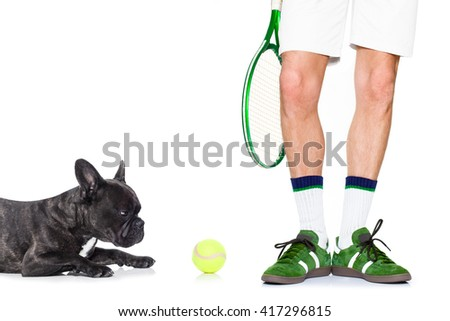 french bulldog dog with owner as tennis player with ball and tennis racket or racquet isolated on white background - stock photo