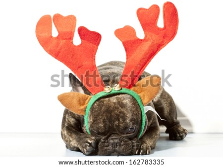 French bulldog dressed up for christmas with horns - stock photo