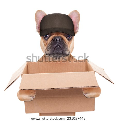 french bulldog holding a moving box, helping out for a relocation, isolated on white background - stock photo
