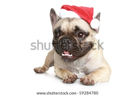 French bulldog in a Christmas hat on a white background - stock photo