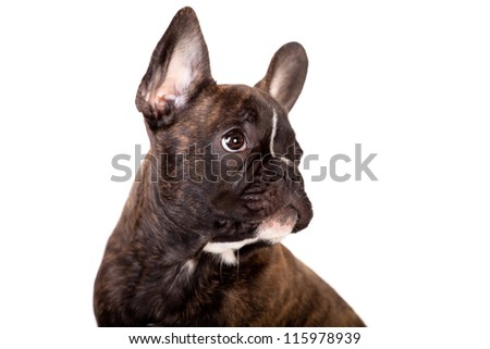 French Bulldog, 3,5 months old, isolated on white background - stock photo
