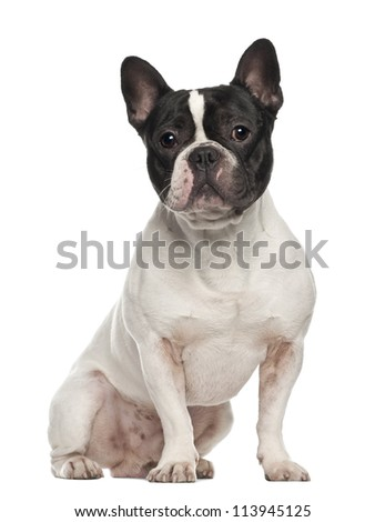 French Bulldog, 18 months old, sitting against white background