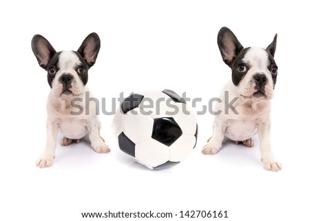 French bulldog puppies with soccer ball over white - stock photo