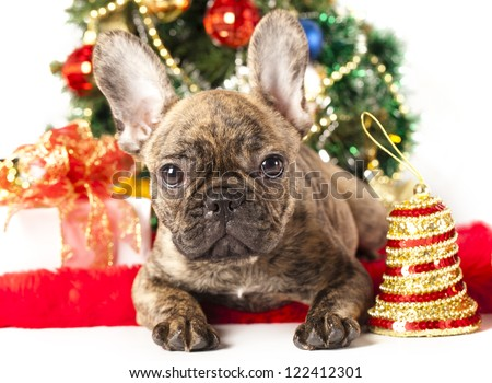 french bulldog puppy and  christmas  decoration