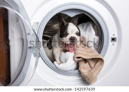 French bulldog puppy inside the washing machine - stock photo