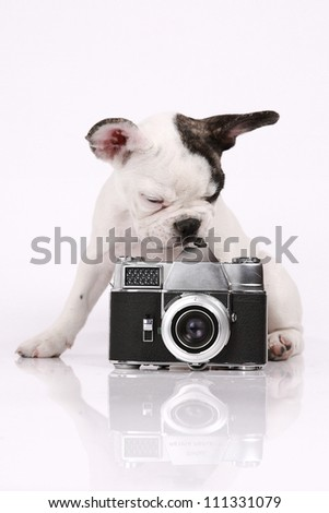 French Bulldog puppy, 3 months old, sitting with a camera in front of white background - stock photo