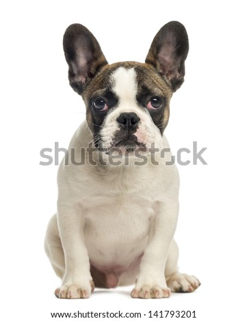 French Bulldog puppy, sitting, looking at the camera, 4 months old, isolated on white - stock photo
