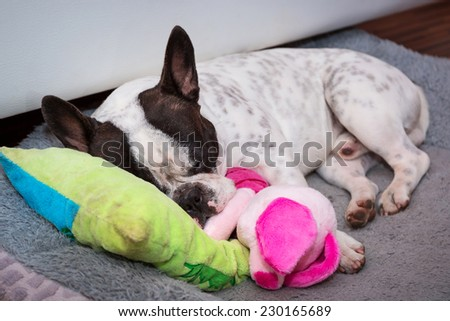 French bulldog puppy sleeping on the pillow - stock photo