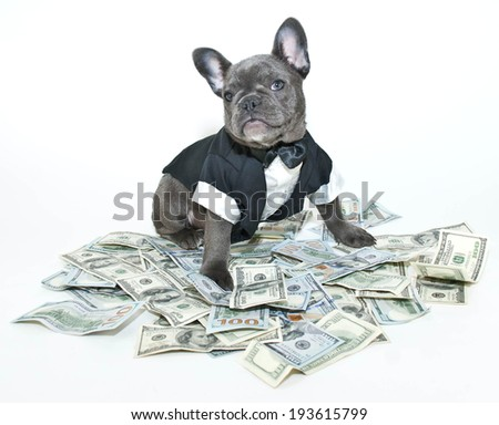 French bulldog puppy wearing a tux and bow tie sitting on a pile on one hundred bills.