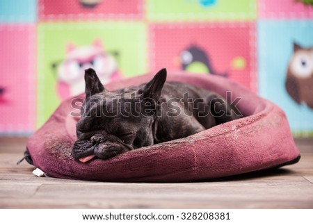 french bulldog relaxing in bed - stock photo