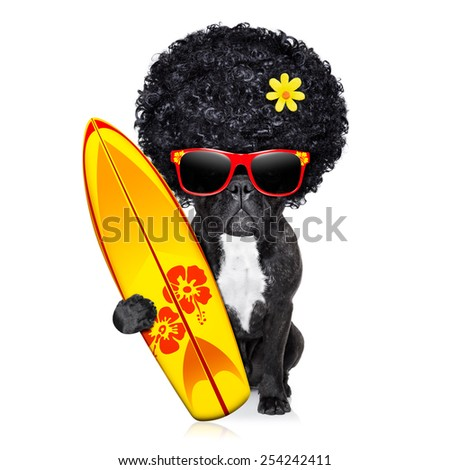 french bulldog surfer dog holding a surfboard wearing afro flower power wig, and red sunglasses, isolated on white background - stock photo