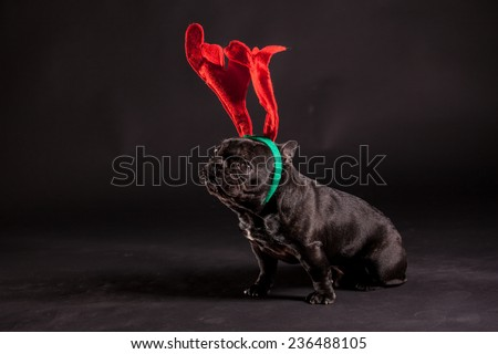 french bulldog wearing antler for christmas - stock photo