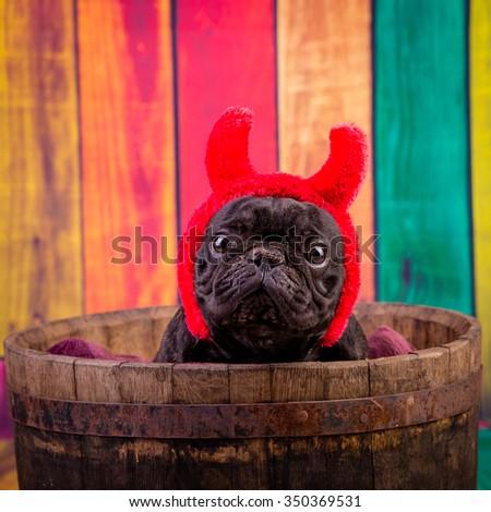 french bulldog wearing devil horn - stock photo