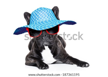 french bulldog with fancy summer hat and red sunglasses - stock photo