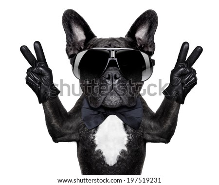french bulldog with victory or peace fingers and black glasses - stock photo