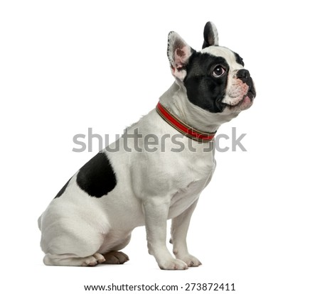 French Bulldog (1 year old) in front of a white background - stock photo