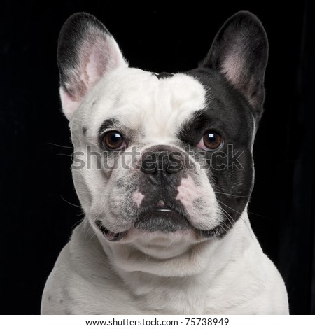 French Bulldog, 3 years old, in front of black background - stock photo