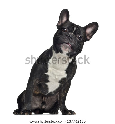 French Bulldog, 3 years old, sitting, isolated on white - stock photo