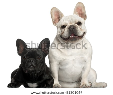 French Bulldogs, 2 years old, in front of white background - stock photo