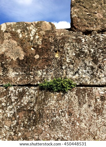 french castle wall with plants - stock photo