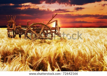 French cornfield - stock photo
