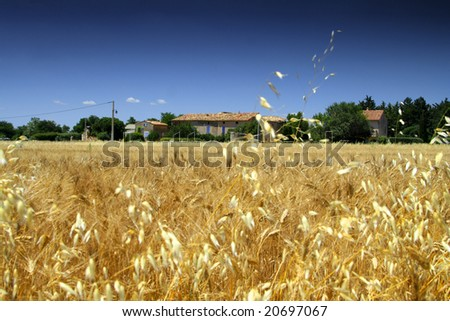 French farm house in a cut corn field. - stock photo