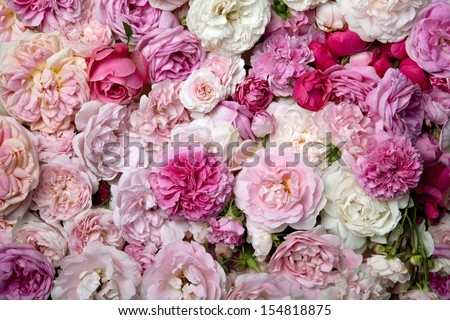 French roses background. - stock photo
