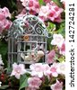 French style shabby chic metal bird cage with vintage bird decoration in pink blossom tree in garden - stock photo