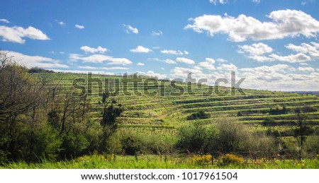 French vineyard under the sun
