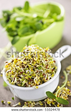 Fresh alfalfa and sunflower sprouts in cups