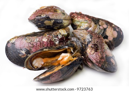 Fresh alive mussels. Isolated on white - stock photo