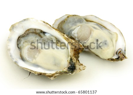 alive fresh oysters stock images royaltyfree images