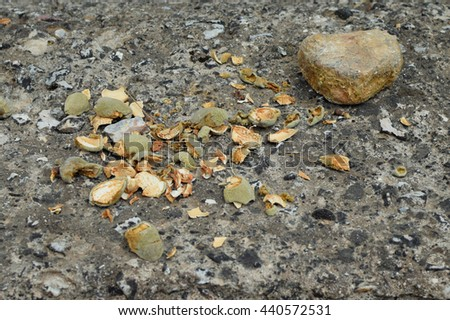 Fresh almond hull shells cracked open with a stone. - stock photo