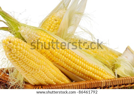Fresh an ear of corn with green leaves on a white background - stock photo
