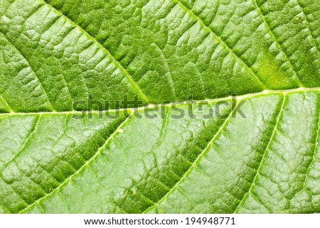 Fresh and bright leaf texture