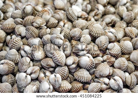 Fresh and delicious cockles background - stock photo