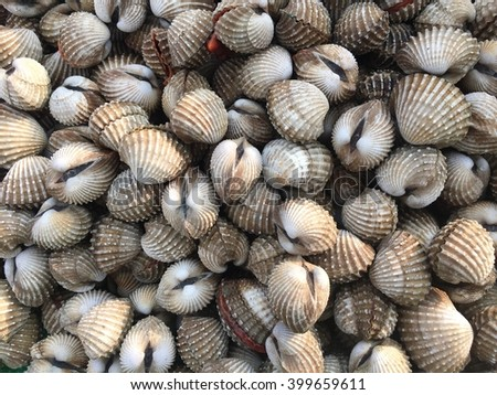 Fresh and delicious cockles for seafood background  - stock photo