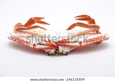 Fresh and delicious steamed or boiled blue crab, turning upside down for seafood on white background - stock photo