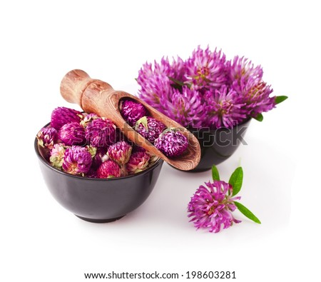 fresh and dried clover flower tea in the wooden scoop isolated on a white background - stock photo