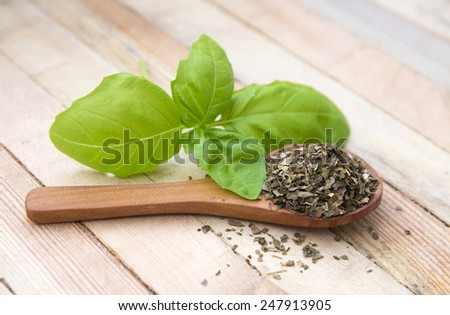 fresh and dried leaf of basil on wood  - stock photo