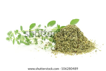 Fresh and dry oregano - stock photo