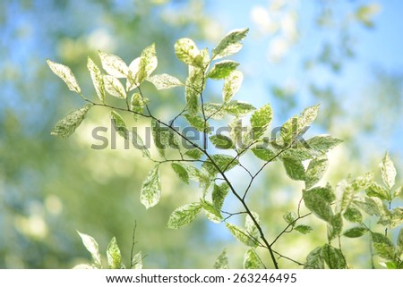 fresh and green leaves - stock photo