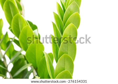 fresh and green leaves Isolated on white background. - stock photo