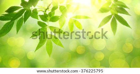 fresh and green leaves,nature background.  - stock photo