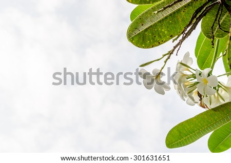 fresh and green leaves on green background - stock photo