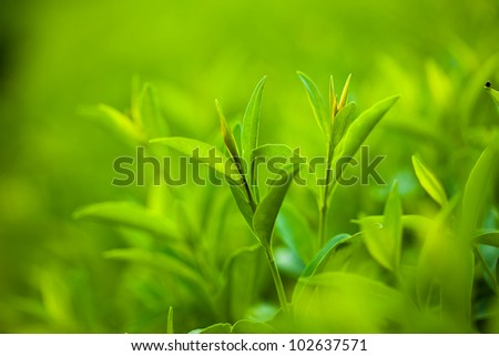 fresh and green leaves (shallow DOF) - stock photo